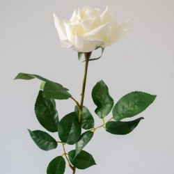 Premium large cream rose
